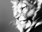 Ritratto di SHADOW LIONHEART